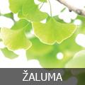 zaluma